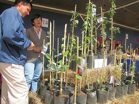 Productora regional de copihue se consolida en el mercado for Viveros en temuco