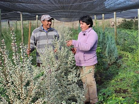 Emprendedores de renaico destacan con vivero forjado con for Viveros en temuco